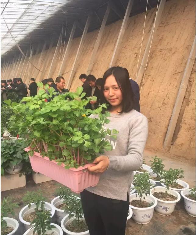 盆栽蔬菜2.jpg