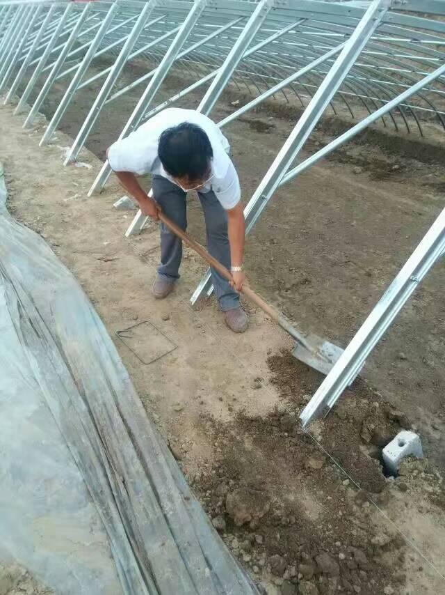 几型钢日光温室大棚的5大优点解析4.jpg