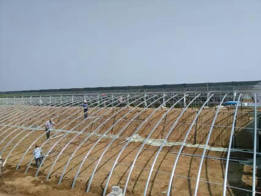 几型钢日光温室大棚的5大优点解析3.jpg