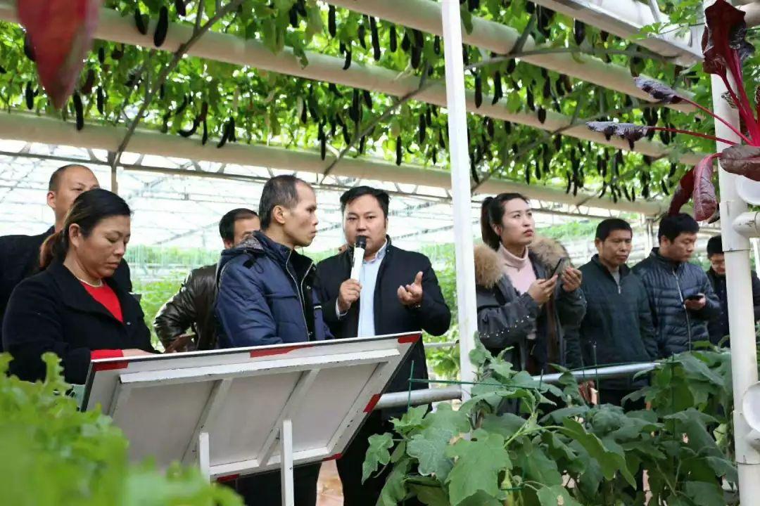 李军老师在菜博会6号馆实地讲解无土栽培