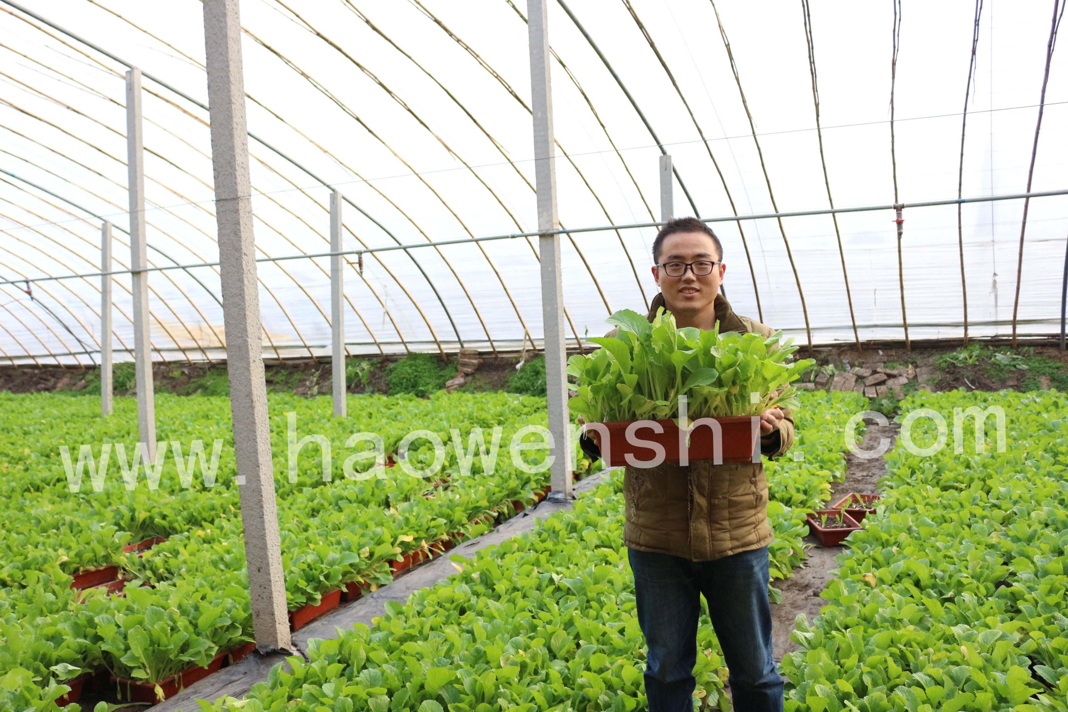 盆栽蔬菜现场演示