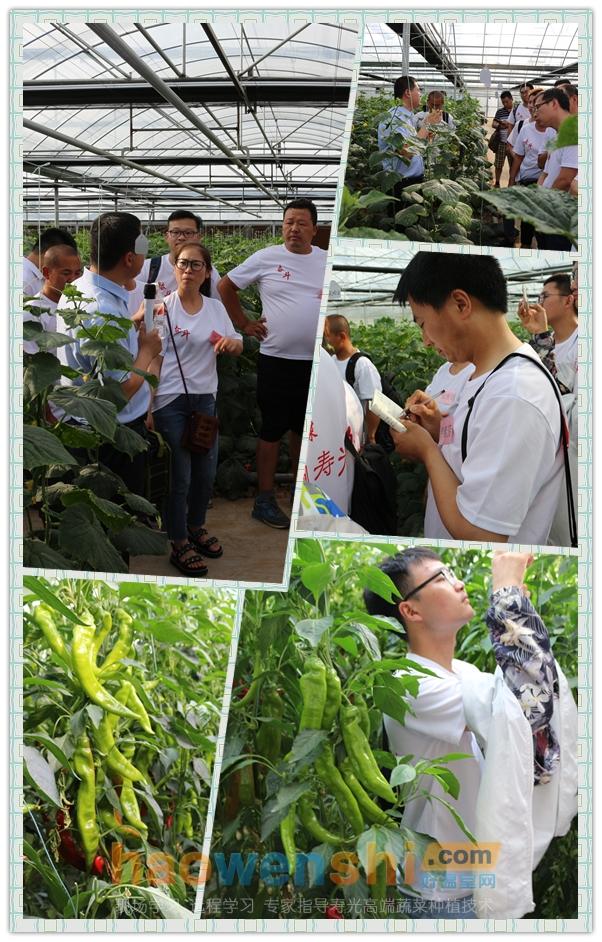 参观黄瓜和辣椒温室