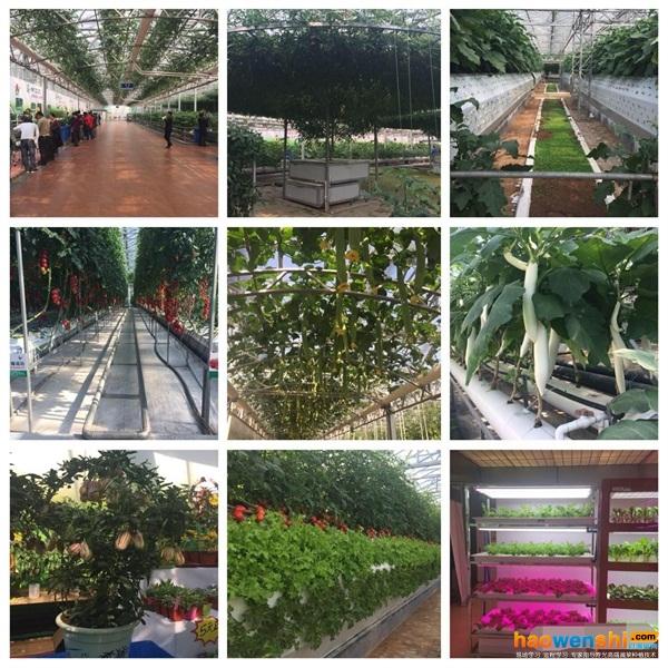 蔬菜产业园内前沿无土栽培技术展示