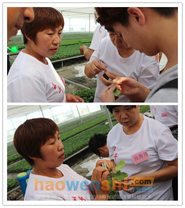 学员在动手嫁接蔬菜.png
