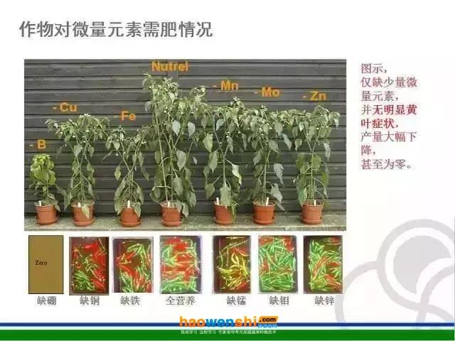 一篇文章让你搞懂番茄缺素,你种植的番茄再也没有缺素症