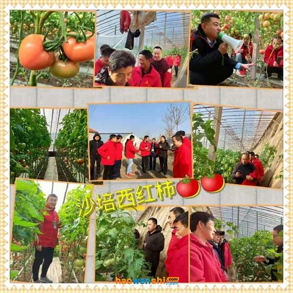 沙培西红柿温室