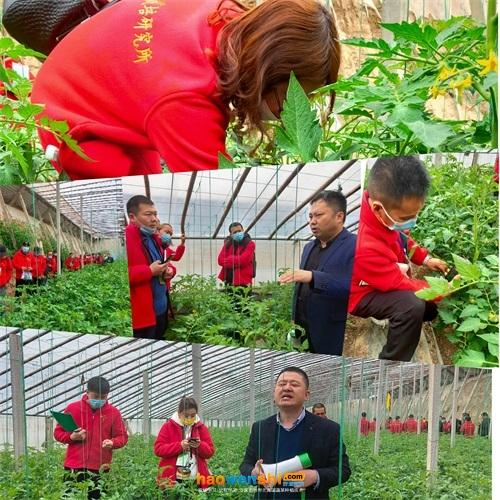 参观砂培西红柿温室
