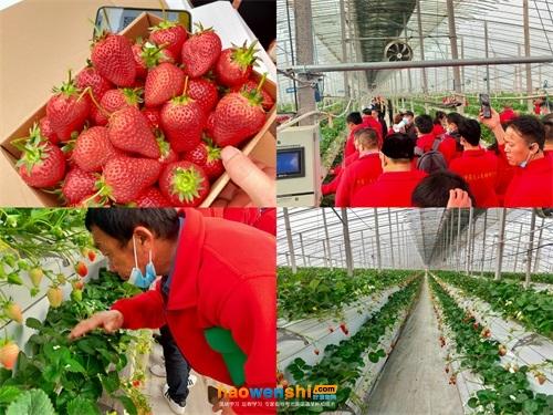 参观草莓基地